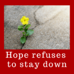 hope-refuses-to-stay-down